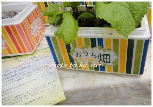 花くらす*野菜くらす2