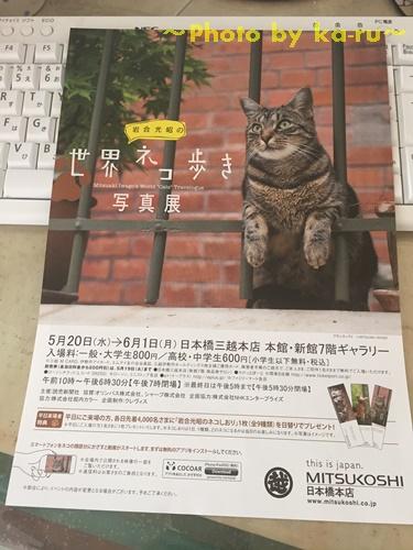 日本橋三越本店で「岩合光昭の世界ネコ歩き 写真展」