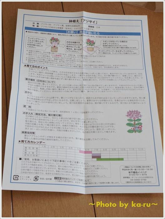 e87(イイハナ・ドットコム)アジサイ KEIKO11