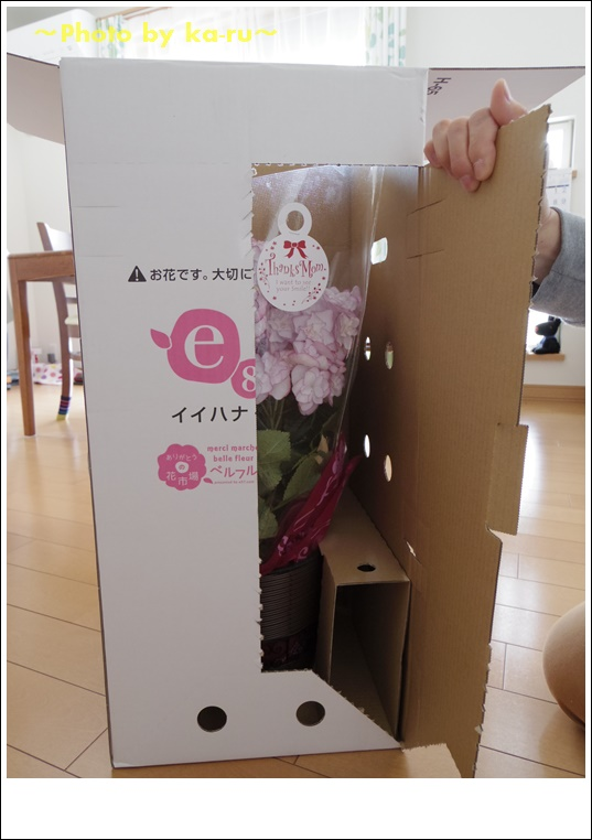 e87(イイハナ・ドットコム)アジサイ KEIKO4