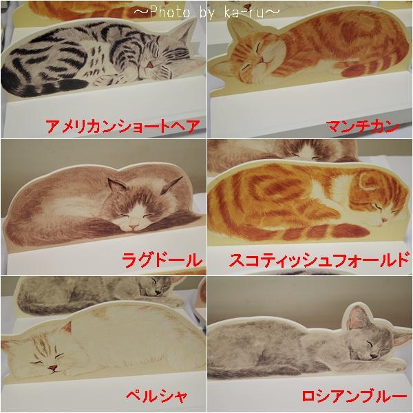 YOU+MORE! 高い所ですやすや眠る 猫のカーテンレール ディスプレイ棚の会_2