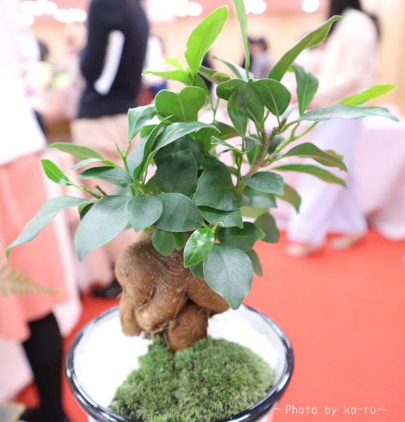 日比谷花壇「父の日」グルメセット_お花「観葉植物」幹