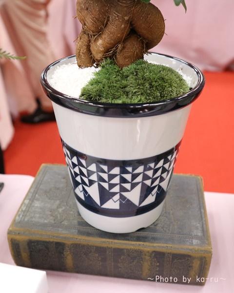 日比谷花壇「父の日」グルメセット_お花「観葉植物」鉢