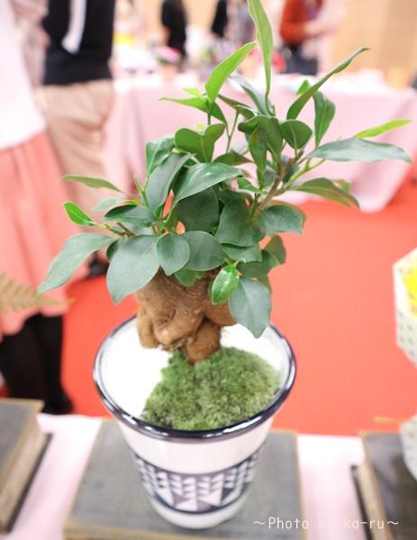 日比谷花壇「父の日」グルメセット_お花「観葉植物」