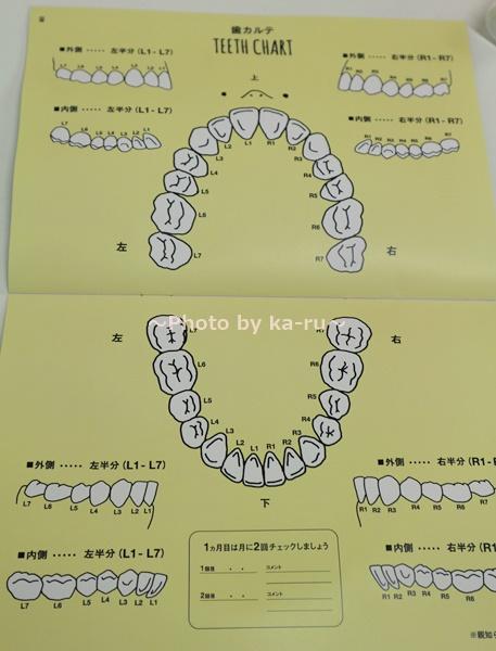 フェリシモ「美歯リズムプログラム」 歯のカルテ