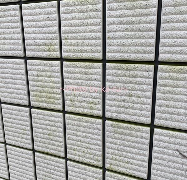 ターボスクラブ_外壁の掃除前の緑色