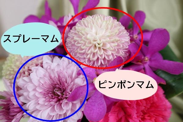 アレンジメント「花てまり」_ピンポンマムとスプレーマム