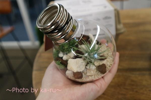 日比谷花壇URBAN GREEN MAKERS 「テラリウムキット」_電球型
