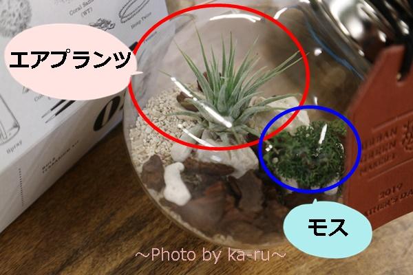 日比谷花壇URBAN GREEN MAKERS 「テラリウムキット」_エアプランツとモス