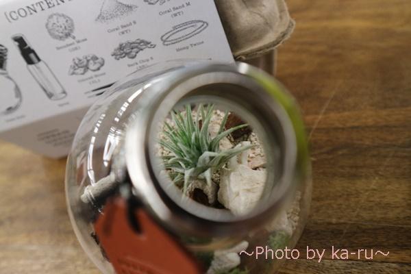 日比谷花壇URBAN GREEN MAKERS 「テラリウムキット」_エアプランツお手入れ方法