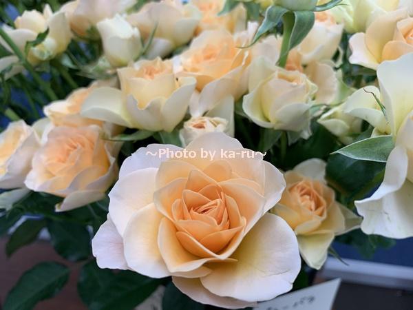 日比谷花壇「ハナノヒ教室 ~基礎から学べる花瓶生け~」_バラ フェリーニ