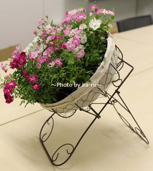 イイハナ鉢植え「Welcome Rose」_アイアン製のスタンド