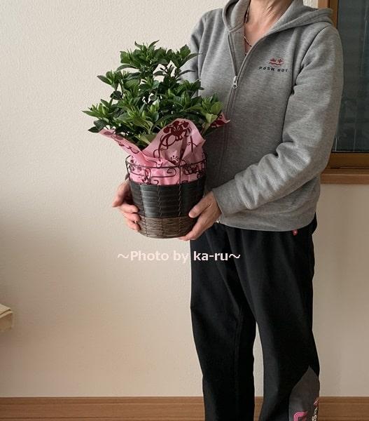 イイハナ母の日 鉢植え「癒しの天然アロマ ガーデニア(くちなし)」_大きさ
